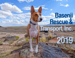 Basenji Rescue And Transport Home